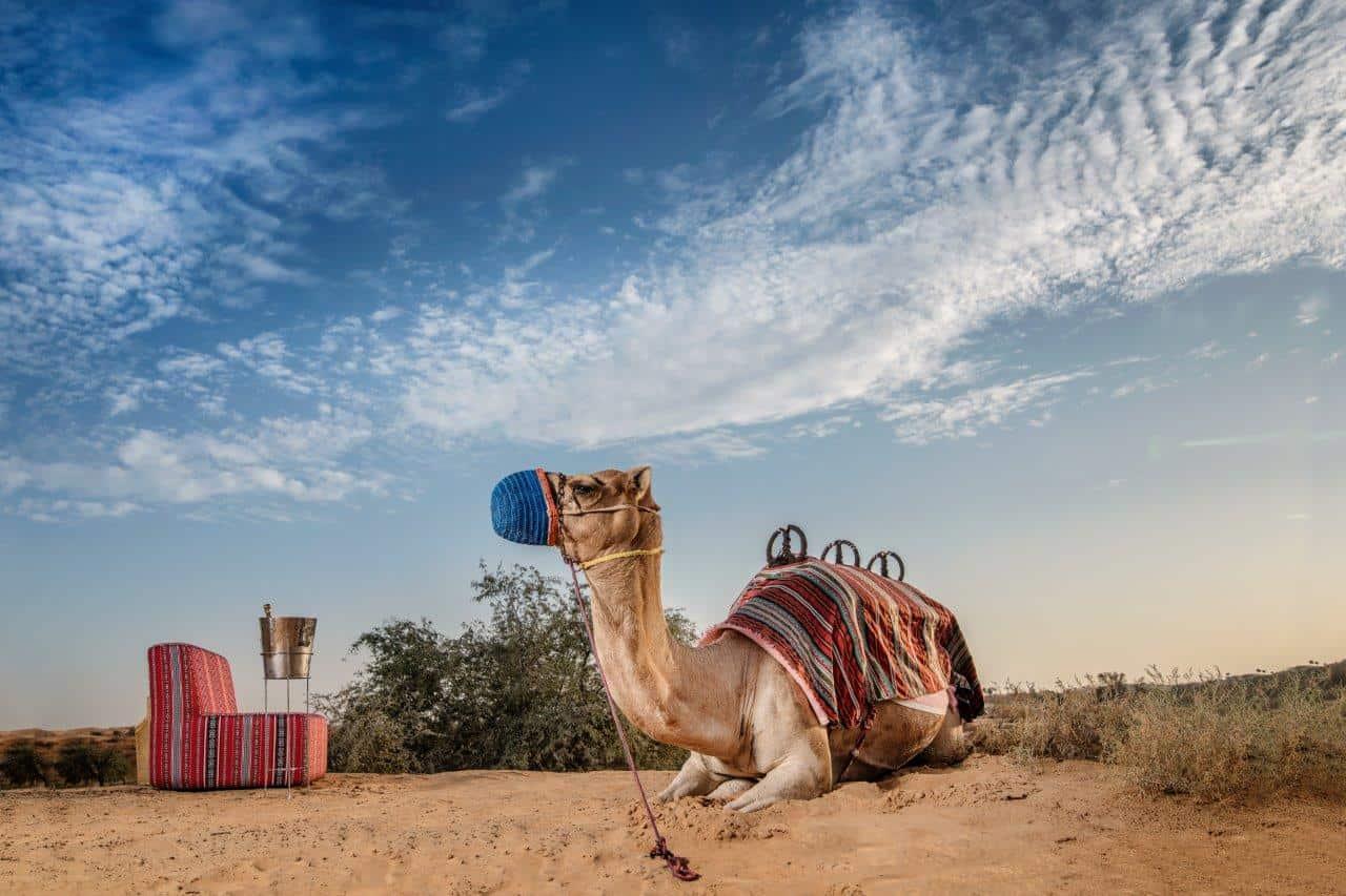 Camel Caravan with Sunset Drinks in Ras Al Khaimah