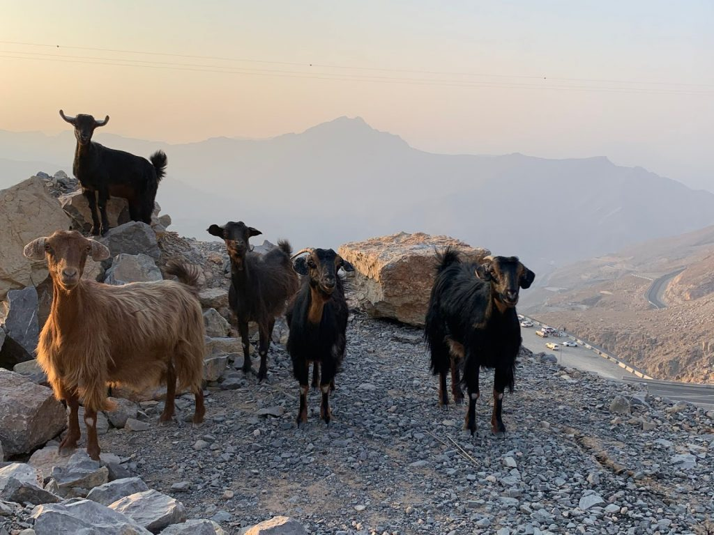 Nature and Eco system at Jebel jais