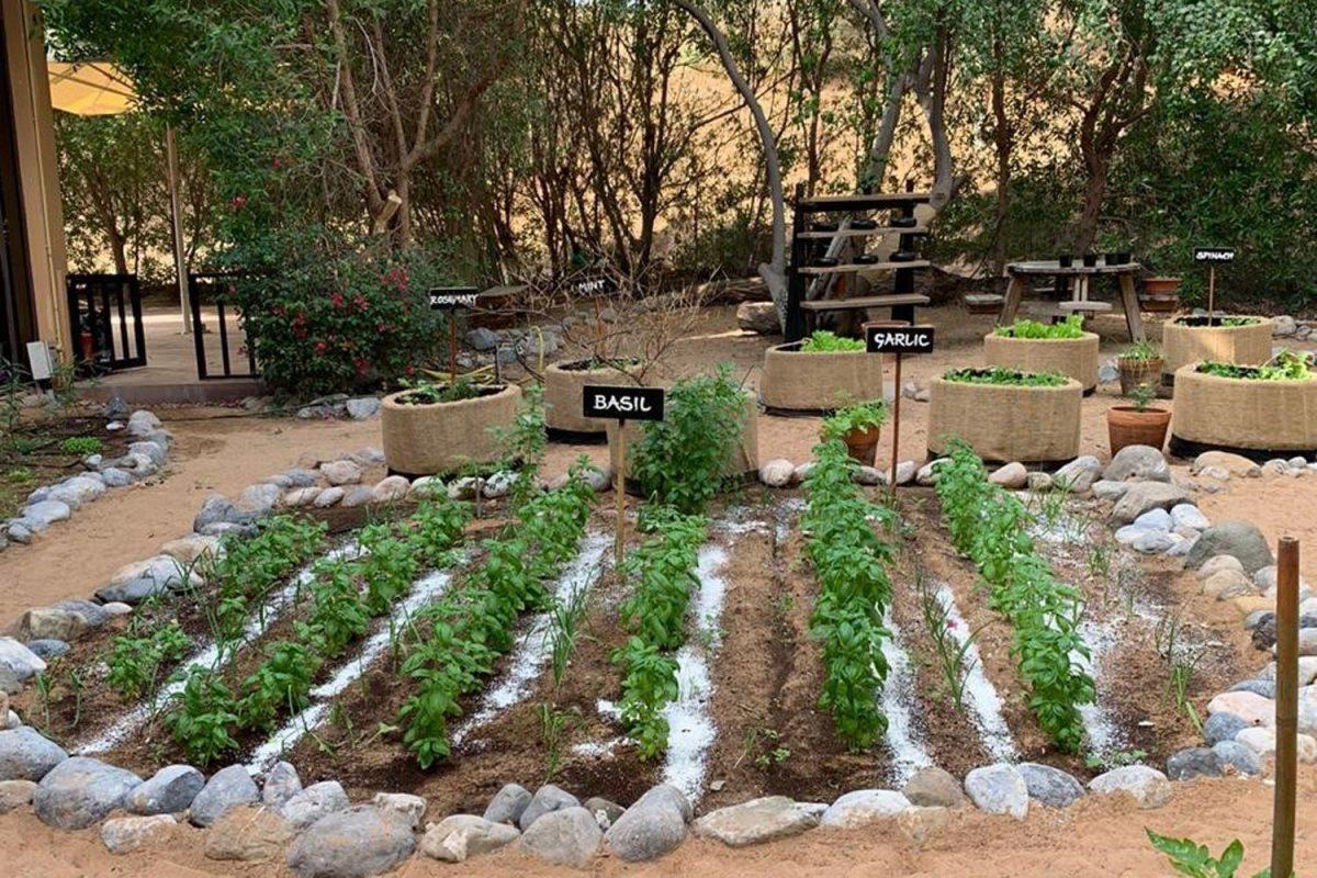 The Ritz-Carlton Ras Al Khaimah, Al Wadi Desert launches Chef's Garden