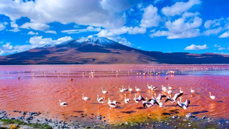 Laguna Colorada, Bolivia Pink Lake